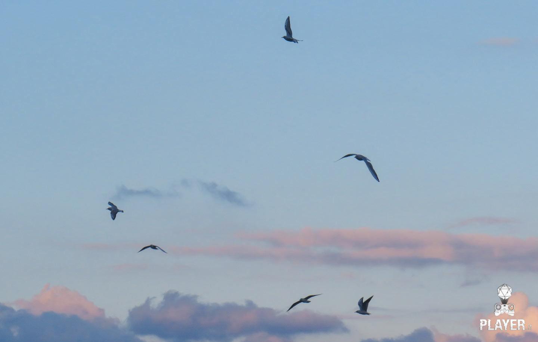 uccelli foto SX540HS
