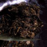 dark souls remastered come sconfiggere nito
