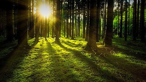Alberi, foreste, sfondo foresta, sfondo alberi, ambiente, ecologia, natura, sfondo natura