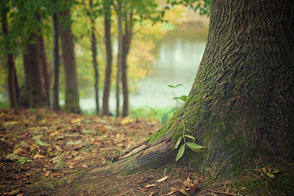 Azione di rimboschimento, piantare alberi, messa a dimora alberi