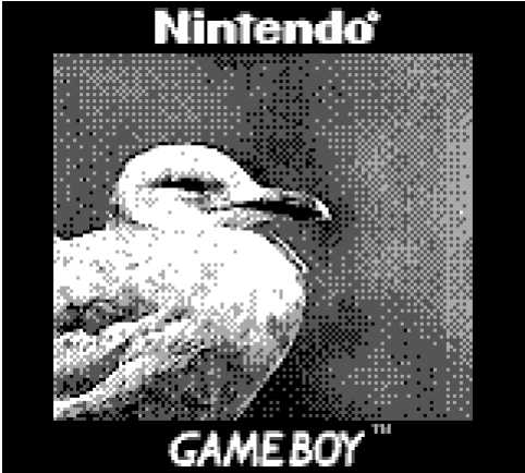 Game Boy Camera foto gabbiano