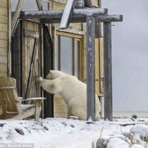 enigma rubrica player gdr gollum orso polare