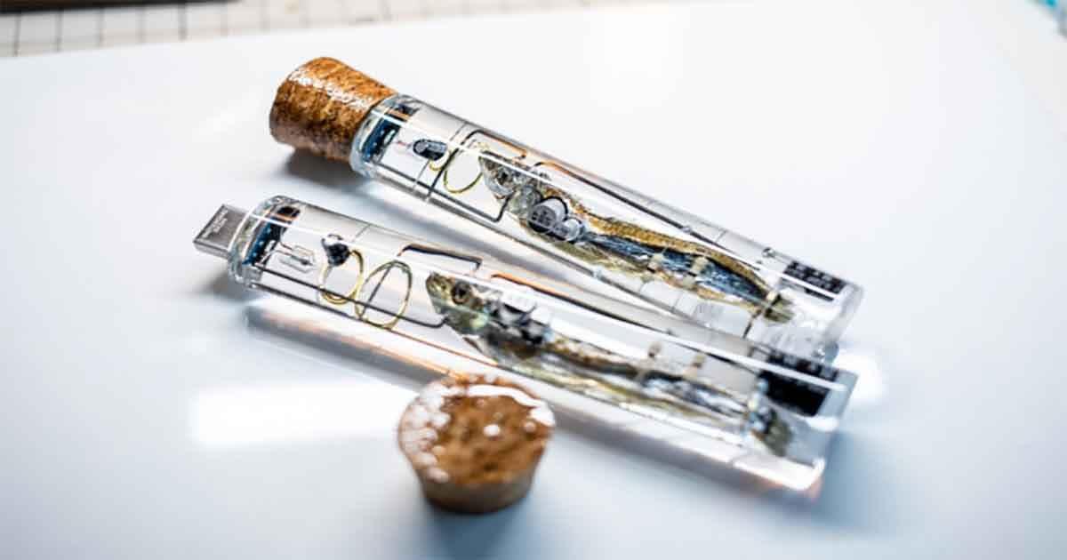 Ragazzo giapponese trasforma le sardine in pennette USB