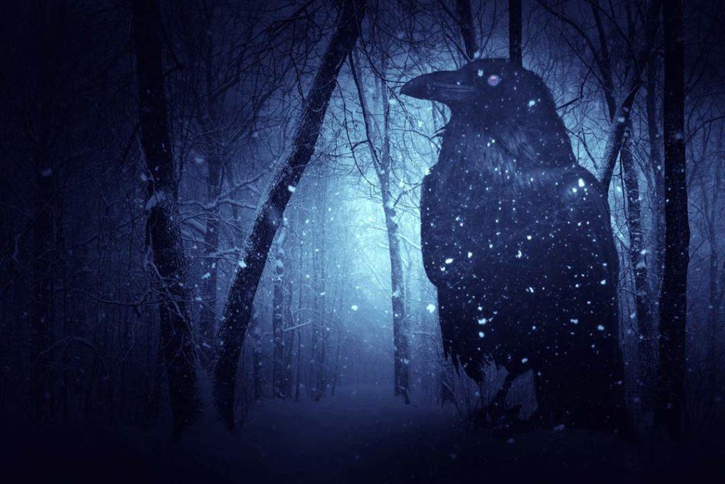 Corvo nero in una foresta innevata e oscura