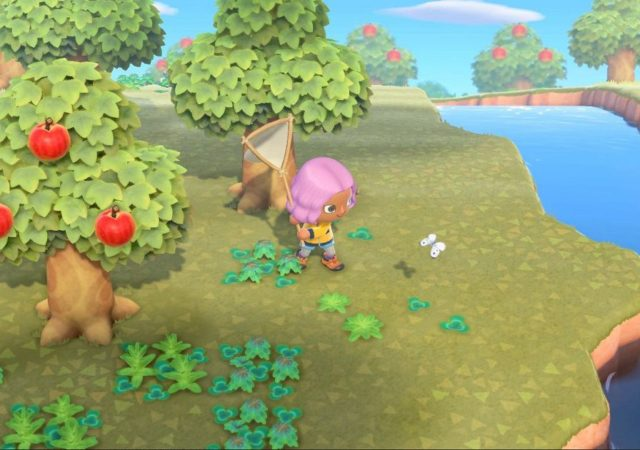 guida per farmare scorpioni e tarantole in animal crossing new horizons