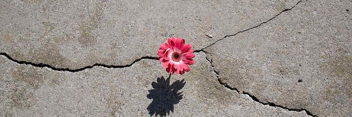 Fiore che cresce nel cemento
