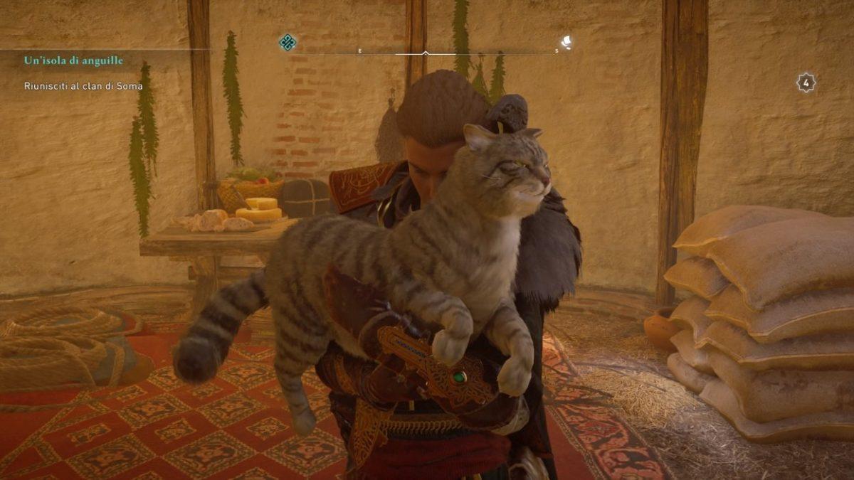 Assassin's Creed Valhalla gatto da coccolare