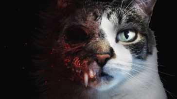 etched memories, horror con un gatto